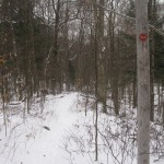 Telephone pole with trailmarkers