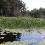 Essex Chain Lakes Sixth Lake Outlet