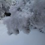 Blue Mountain Tree Ice