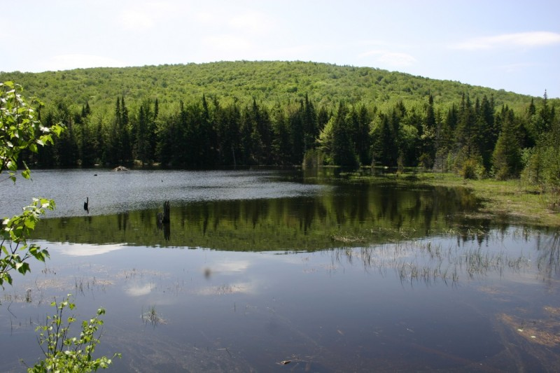 Wakely Mountain Trailside Pond