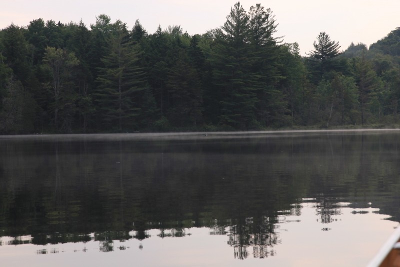 Essex Chain Lakes Loon on Sixth Lake