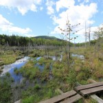 Hurricane Mountain Wilderness Pond